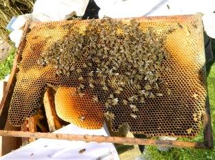 Cadre 4 face A ruche1