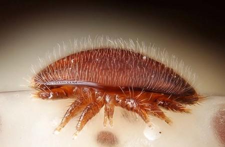vetopharma-varroa-e1448276843507