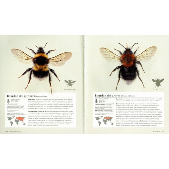 abeilles-une-histoire-naturelle